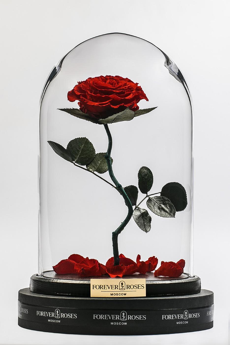 Роза в колбе (красная) на изогнутом стебле в Москве
