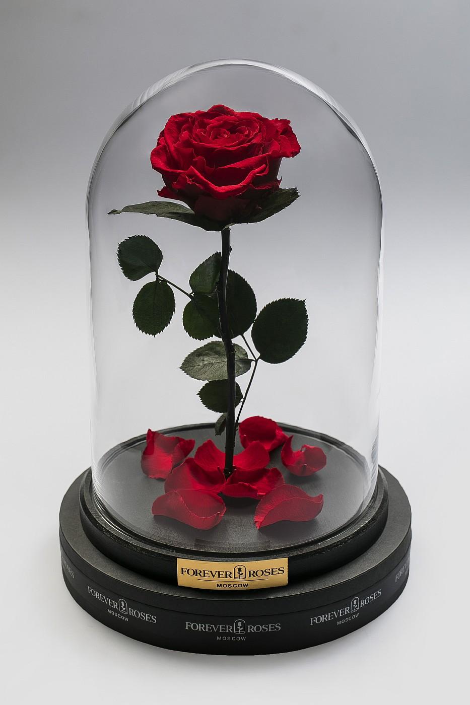 Роза в колбе (красная) на прямом стебле, 33 см в Москве