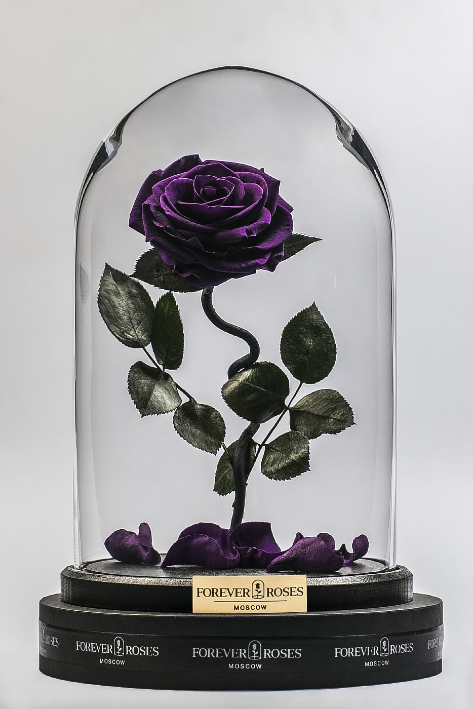 Роза в колбе (фиолетовая) на изогнутом стебле, 33 см в Москве