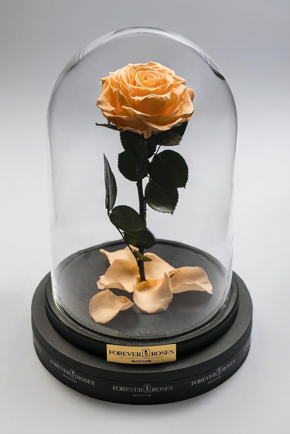 Роза в колбе (персиковый) на прямом стебле, 33 см в Москве