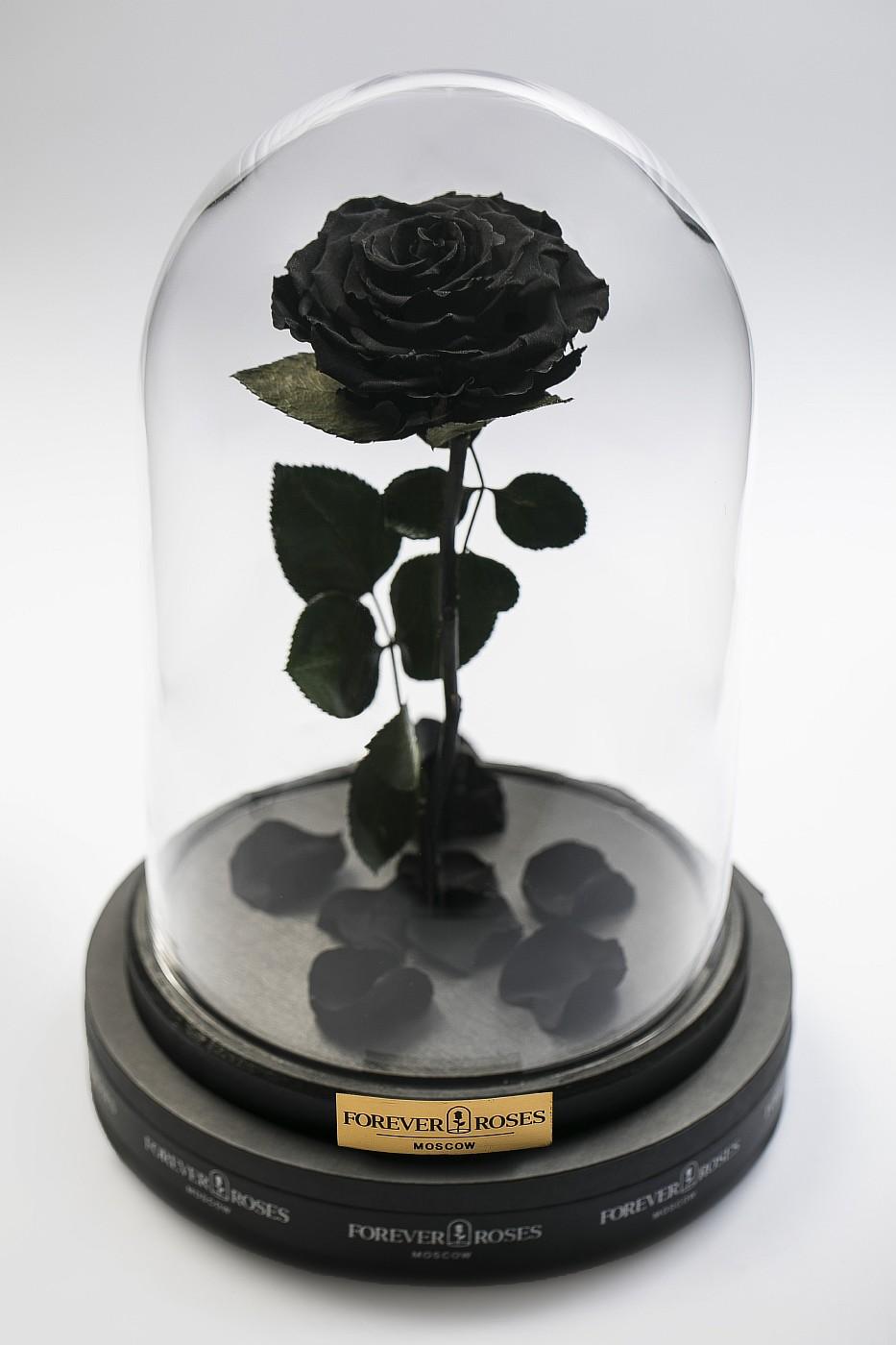 Роза в колбе (черная) на прямом стебле, 33 см в Москве