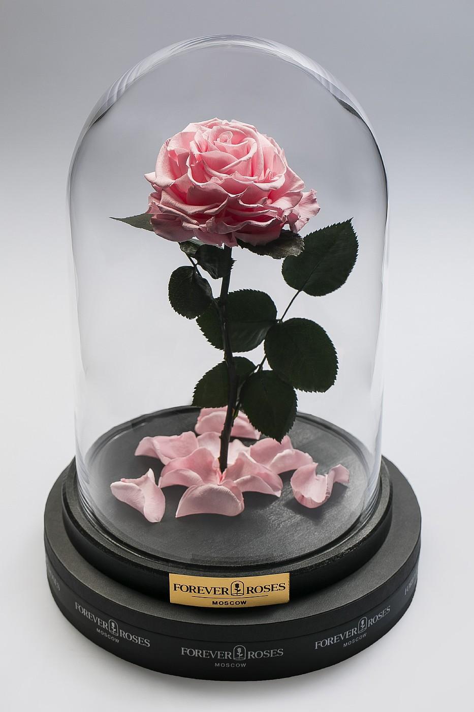 Роза в колбе (светло розовая) на прямом стебле, 27 см в Москве