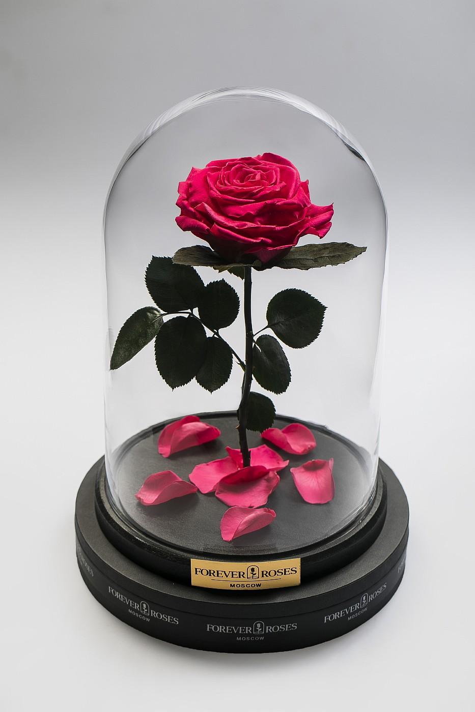 Роза в колбе (ярко розовая) на прямом стебле, 27 см в Москве