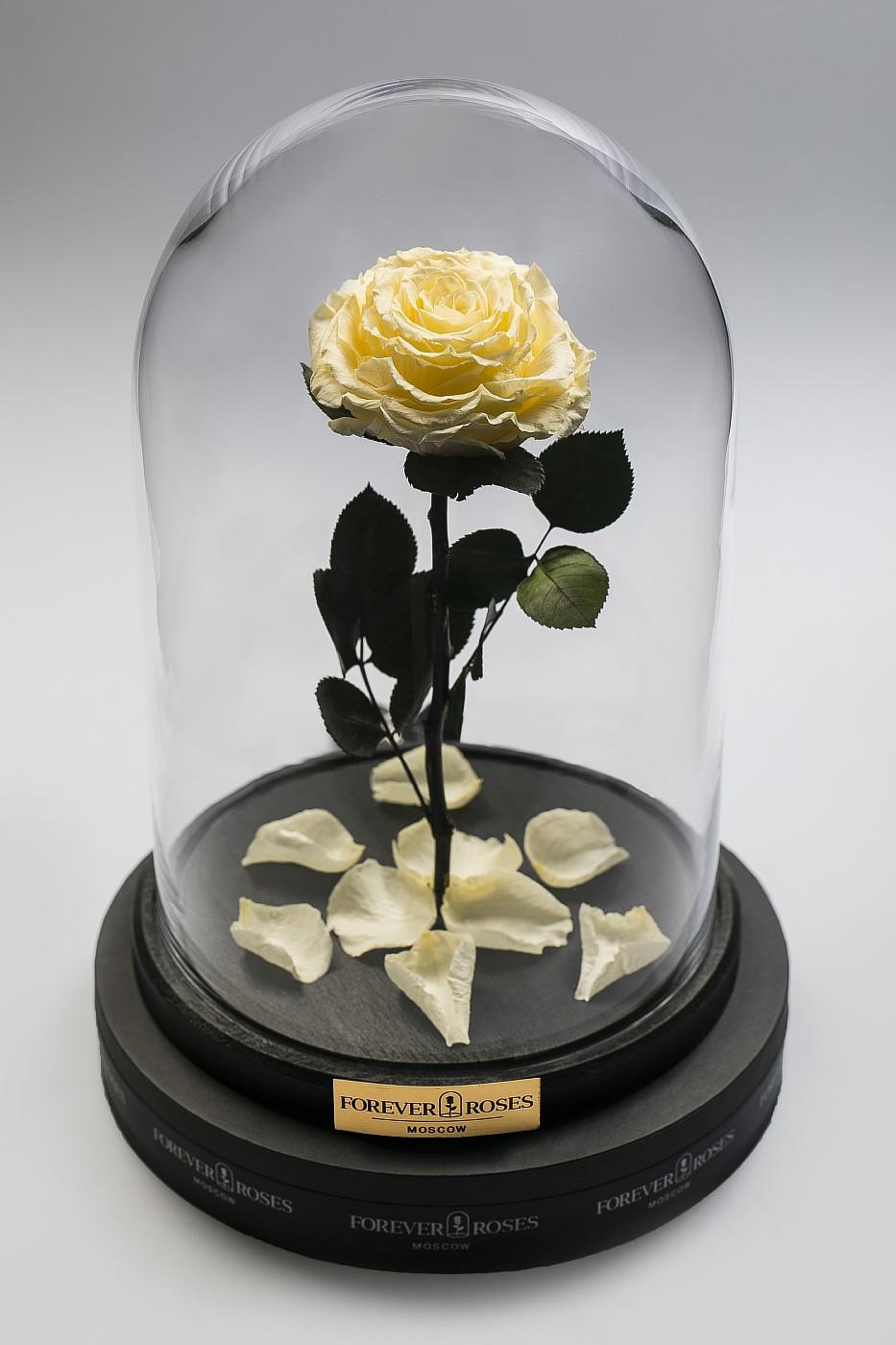 Роза в колбе (кремовый) на прямом стебле, 33 см в Москве