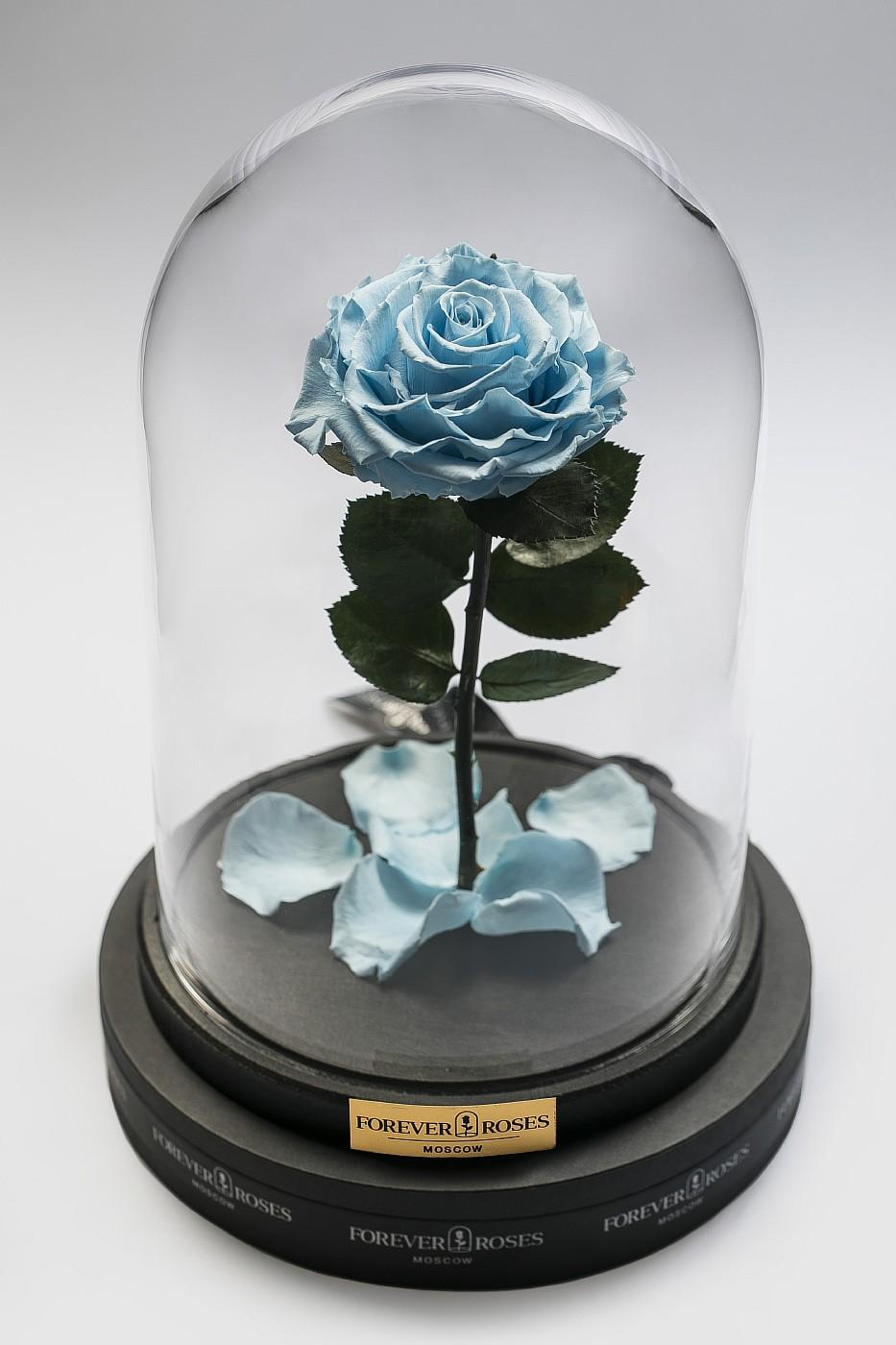 Роза в колбе (голубая) на прямом стебле, 27 см в Москве