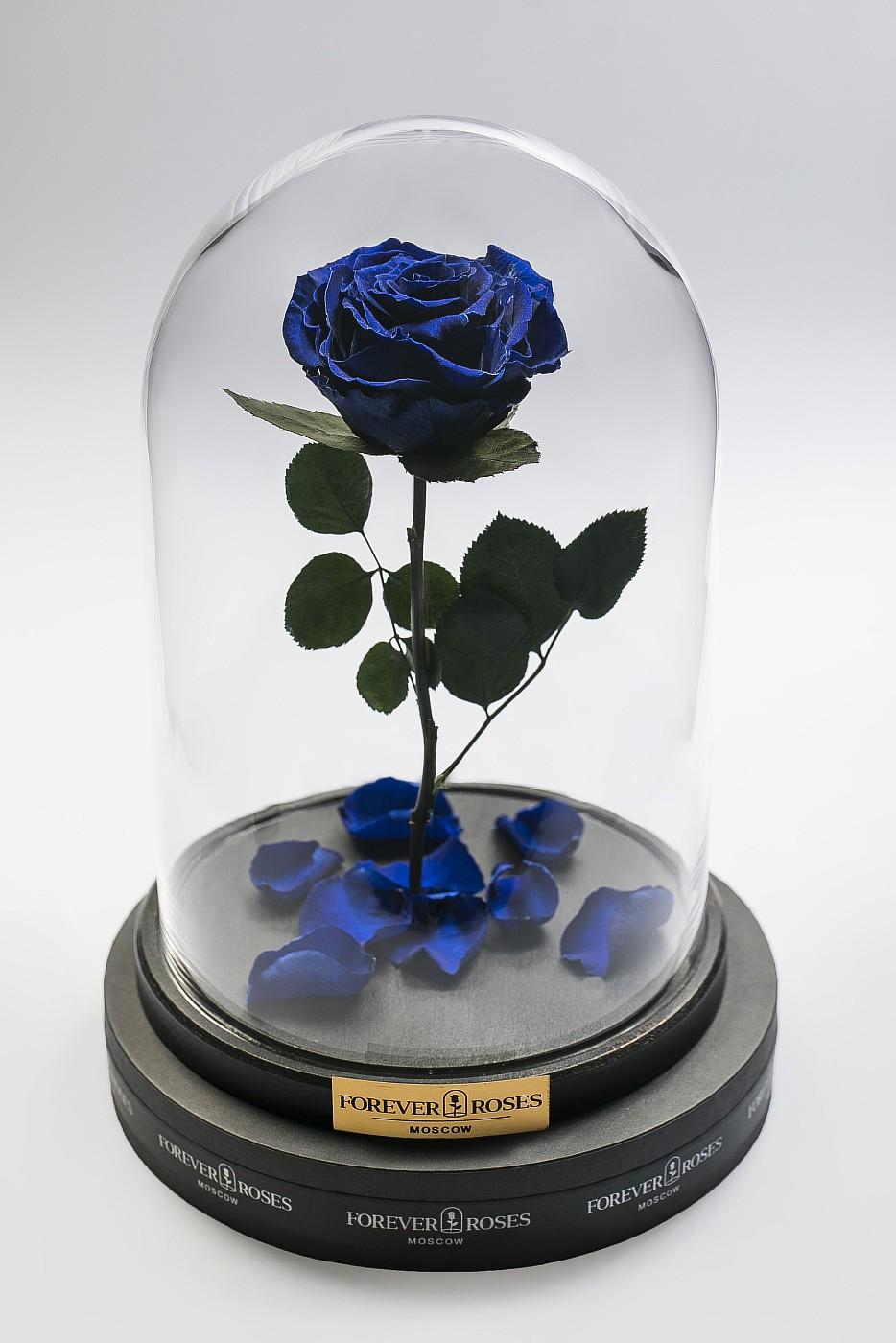 Роза в колбе (синяя) на прямом стебле, 33 см в Москве