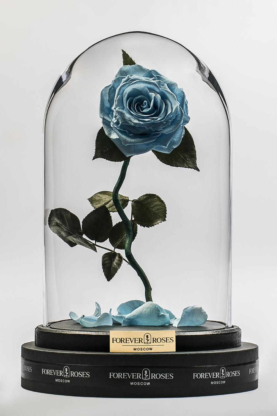 Роза в колбе (голубая) на изогнутом стебле, 33 см в Москве