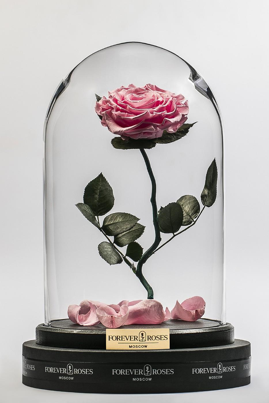 Роза в колбе (светло розовая) на изогнутом стебле, 33 см в Москве