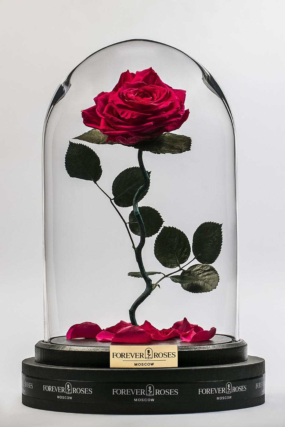 Роза в колбе (ярко розовая) на изогнутом стебле, 33 см в Москве
