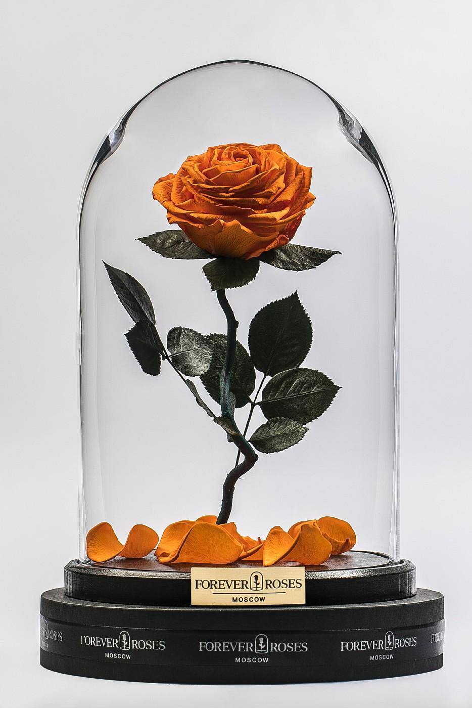 Роза в колбе (оранжевая) на изогнутом стебле, 33 см в Москве