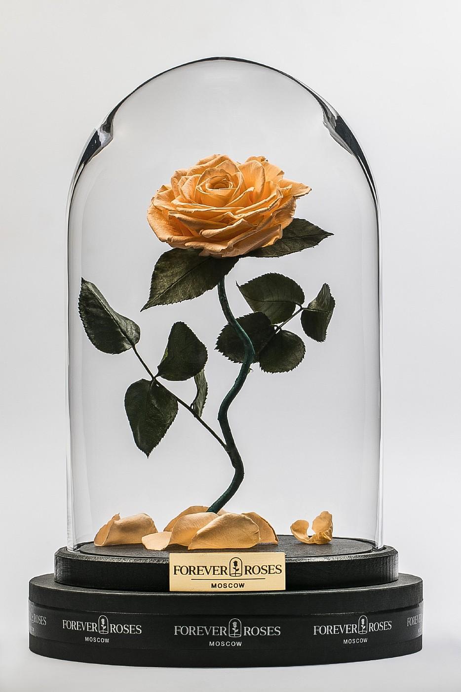 Роза в колбе (персиковый) на изогнутом стебле, 33 см в Москве