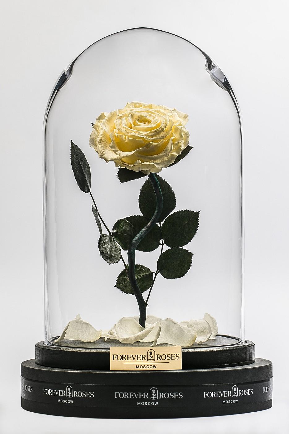 Роза в колбе (кремовый) на изогнутом стебле, 33 см в Москве